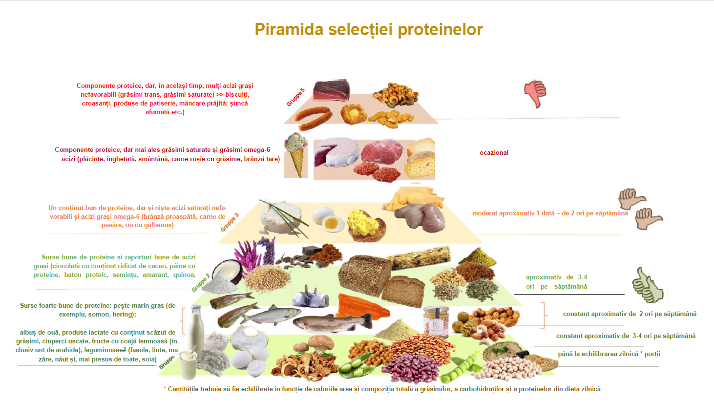 piramida selectiei proteinelor